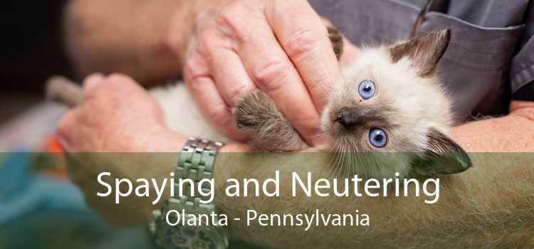 Spaying and Neutering Olanta - Pennsylvania