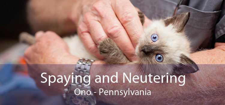 Spaying and Neutering Ono - Pennsylvania