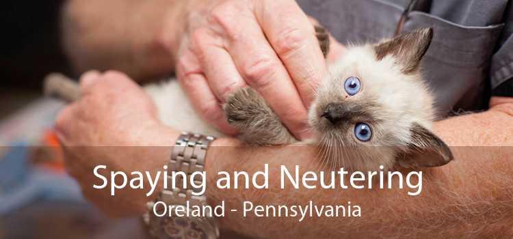 Spaying and Neutering Oreland - Pennsylvania