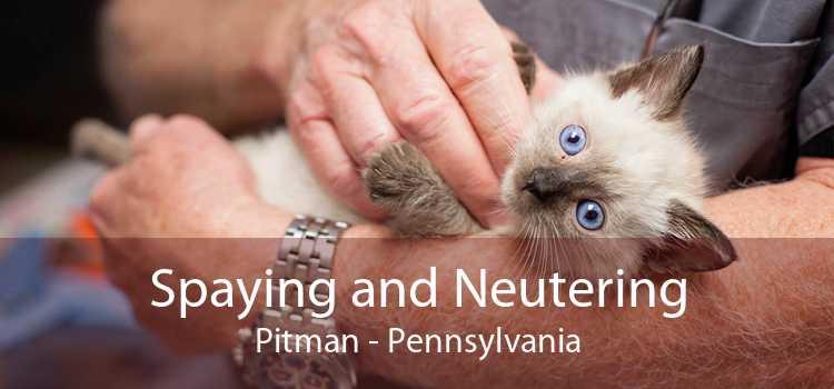 Spaying and Neutering Pitman - Pennsylvania
