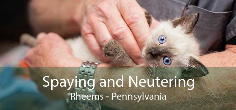 Spaying and Neutering Rheems - Pennsylvania