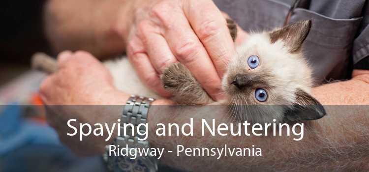 Spaying and Neutering Ridgway - Pennsylvania