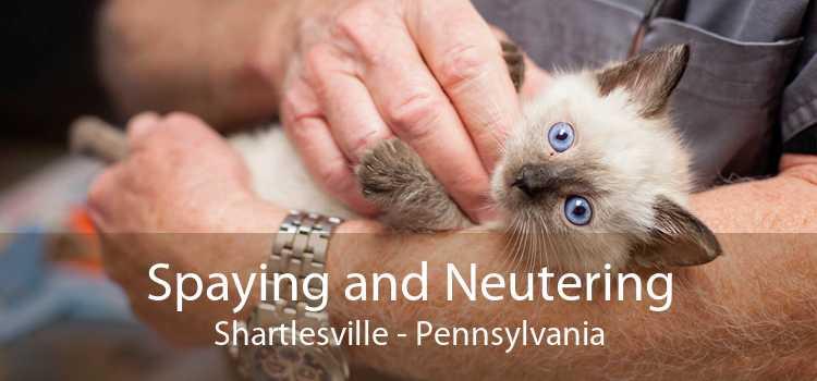 Spaying and Neutering Shartlesville - Pennsylvania