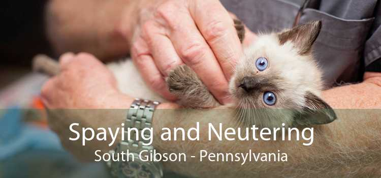 Spaying and Neutering South Gibson - Pennsylvania