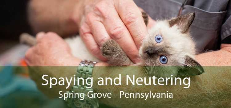Spaying and Neutering Spring Grove - Pennsylvania