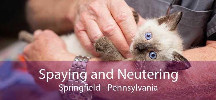Spaying and Neutering Springfield - Pennsylvania