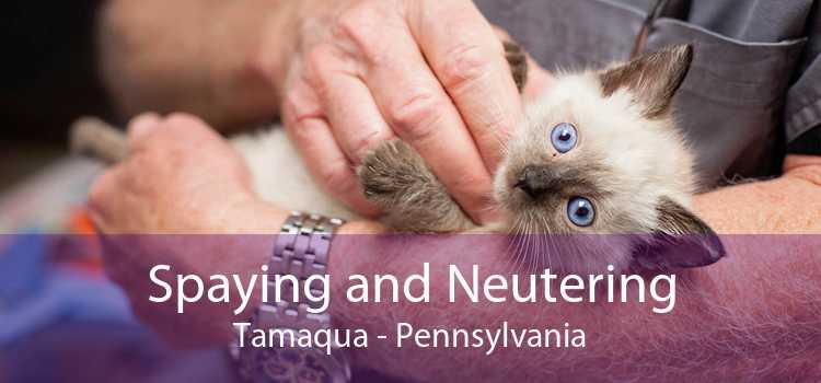 Spaying and Neutering Tamaqua - Pennsylvania