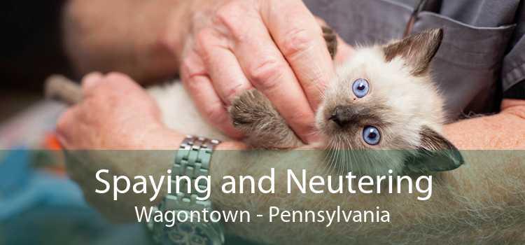Spaying and Neutering Wagontown - Pennsylvania