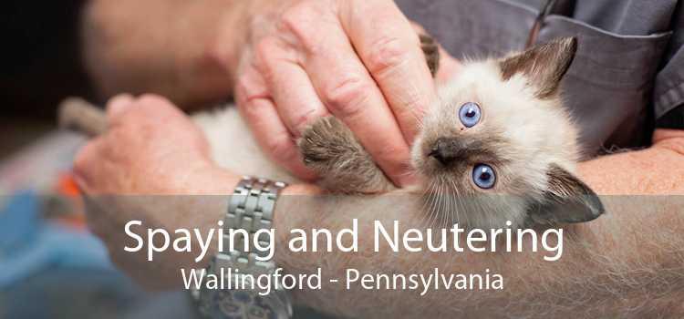 Spaying and Neutering Wallingford - Pennsylvania