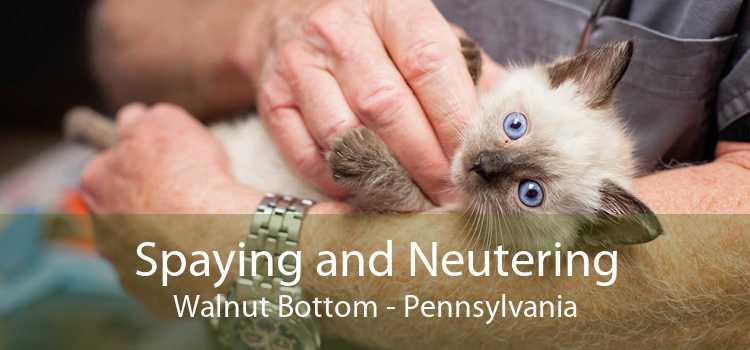Spaying and Neutering Walnut Bottom - Pennsylvania