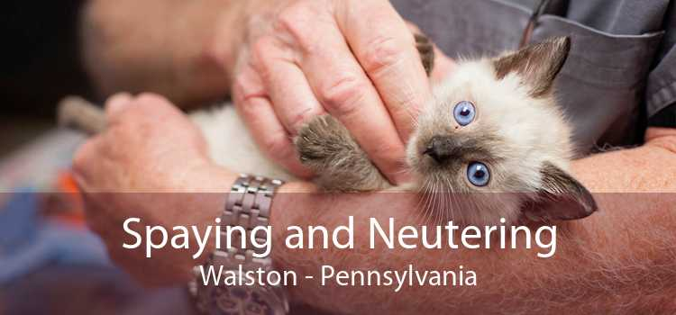 Spaying and Neutering Walston - Pennsylvania