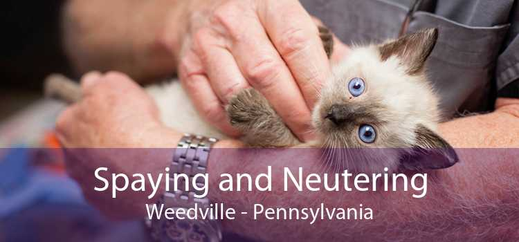 Spaying and Neutering Weedville - Pennsylvania