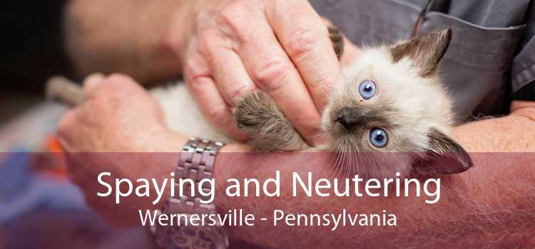 Spaying and Neutering Wernersville - Pennsylvania