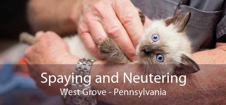 Spaying and Neutering West Grove - Pennsylvania