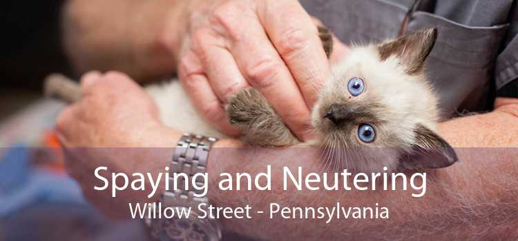 Spaying and Neutering Willow Street - Pennsylvania