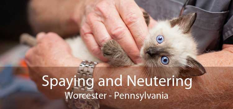 Spaying and Neutering Worcester - Pennsylvania
