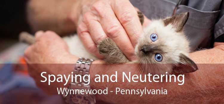 Spaying and Neutering Wynnewood - Pennsylvania