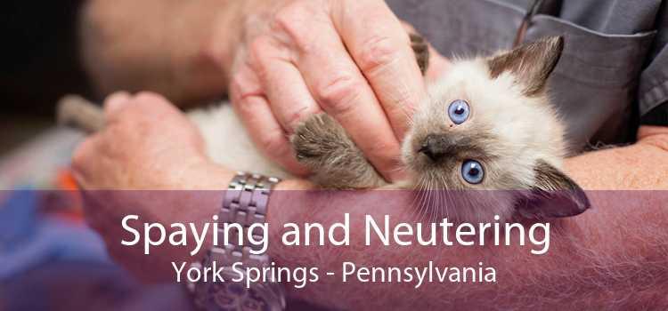 Spaying and Neutering York Springs - Pennsylvania