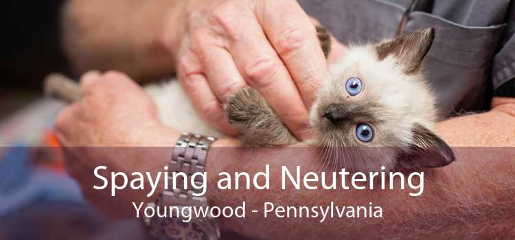 Spaying and Neutering Youngwood - Pennsylvania