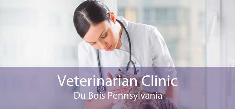 Veterinarian Clinic Du Bois Pennsylvania