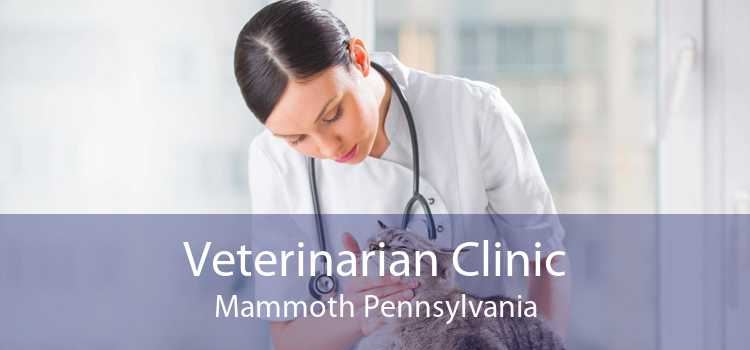 Veterinarian Clinic Mammoth Pennsylvania