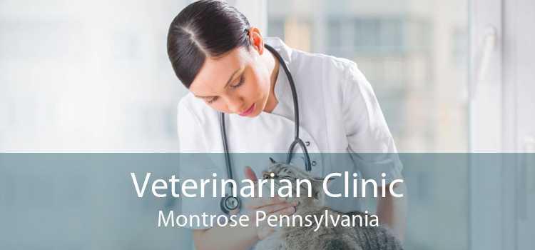 Veterinarian Clinic Montrose Pennsylvania
