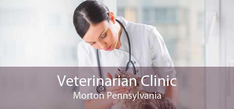 Veterinarian Clinic Morton Pennsylvania