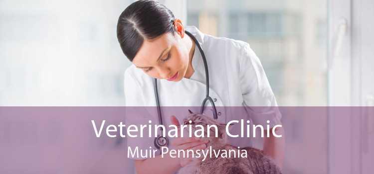 Veterinarian Clinic Muir Pennsylvania