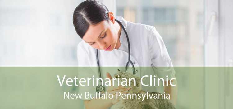 Veterinarian Clinic New Buffalo Pennsylvania