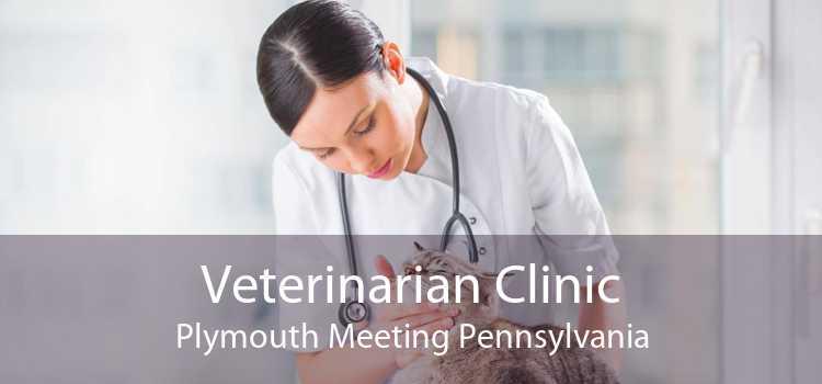 Veterinarian Clinic Plymouth Meeting Pennsylvania