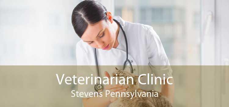 Veterinarian Clinic Stevens Pennsylvania
