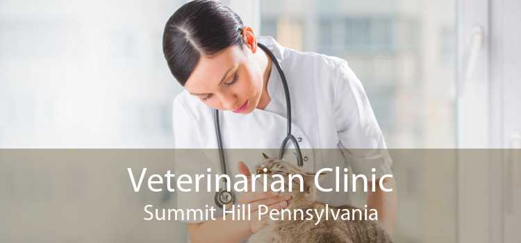 Veterinarian Clinic Summit Hill Pennsylvania