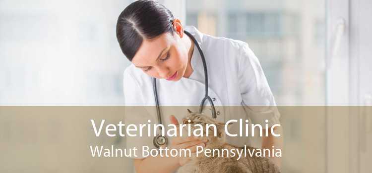 Veterinarian Clinic Walnut Bottom Pennsylvania