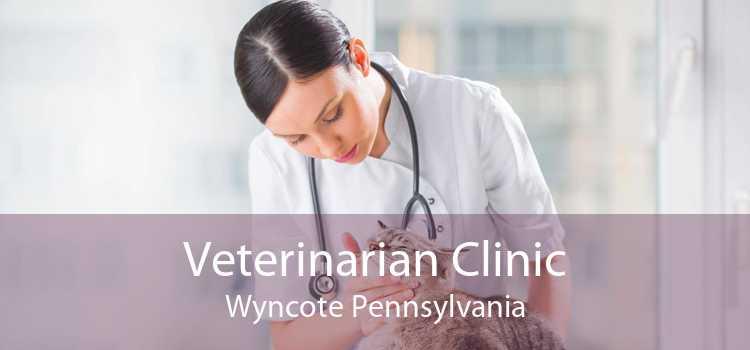 Veterinarian Clinic Wyncote Pennsylvania